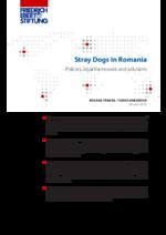 Stray dogs in Romania